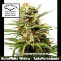 Auto White Widow – Autofloreciente – Dutch Passion