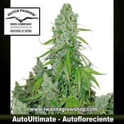 Auto Ultimate – Autofloreciente – Dutch Passion