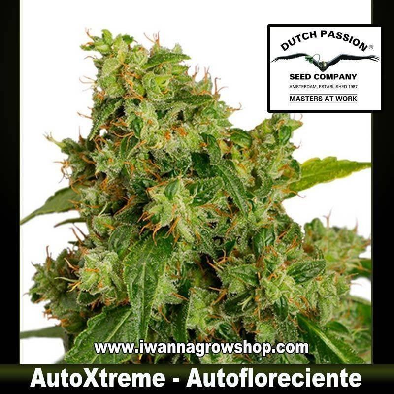 AutoXtreme
