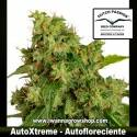 AutoXtreme – Autofloreciente – Dutch Passion