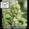 StarRyder – Autofloreciente – Dutch Passion