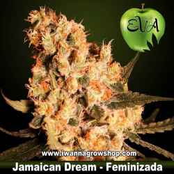 Jamaican Dream Feminizada Eva Seeds - 3, 6 y 9 u.