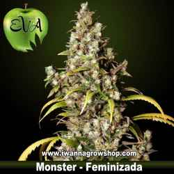 MONSTER de EVA SEEDS – semilla feminizada (SATIVA)