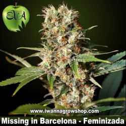 MISSING de EVA SEEDS | Feminizada | Indica-Sativa
