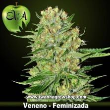 VENENO de EVA SEEDS | Feminizada | Indica