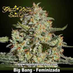 Big Bang feminizada - Green House - 3, 5, y 10 u.