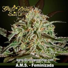 A.M.S. – Feminizada – Green House