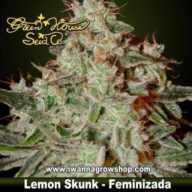 LEMON SKUNK de GREEN HOUSE | Feminizada | Indica-Sativa