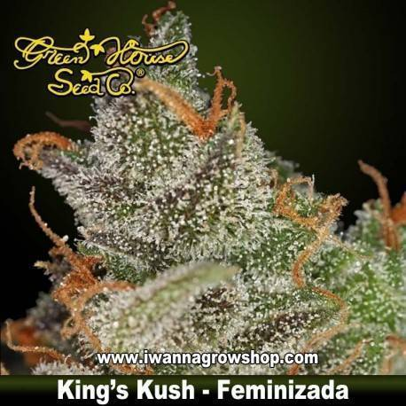 King's Kush Feminizada - Green House - 3, 5, y 10 u.