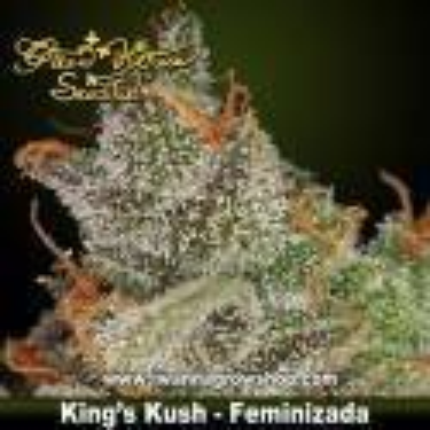 KING'S KUSH de GREEN HOUSE | Feminizada | Indica