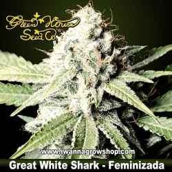 Great White Shark – Feminizada – Green House