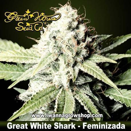 Great White Shark feminzada - Green House - 3, 5, y 10 u.