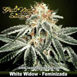 White Widow – Feminizada – Green House
