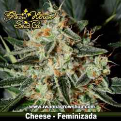 Cheese – Feminizada – Green House