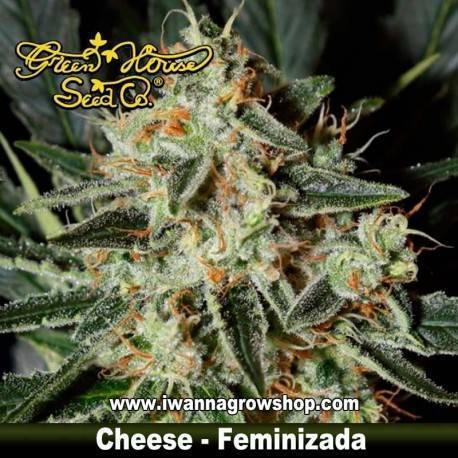 Chesse feminizada - Green House - 3, 5 y 10 u.