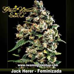 Jack Herer feminizada - Green House - 3, 5 y 10 u.