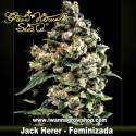 Jack Herer – Feminizada – Green House