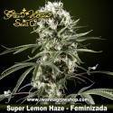 SUPER LEMON HAZE de GREEN HOUSE | Feminizada | Sativa
