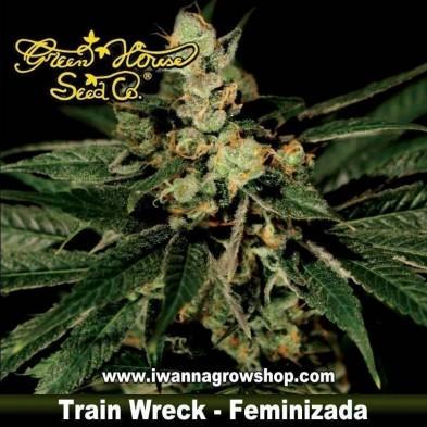 TRAIN WRECK de GREEN HOUSE | Feminizada | Indica