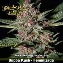 Bubba Kush – Feminizada – Green House