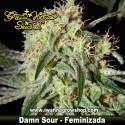 Damn Sour – Feminizada – Green House