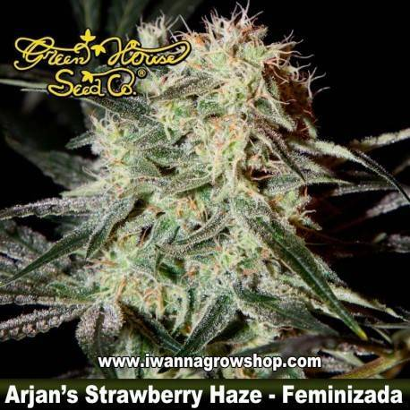 Arjan's Strawberry Haze feminizada - Green House - 5 y 10 u.