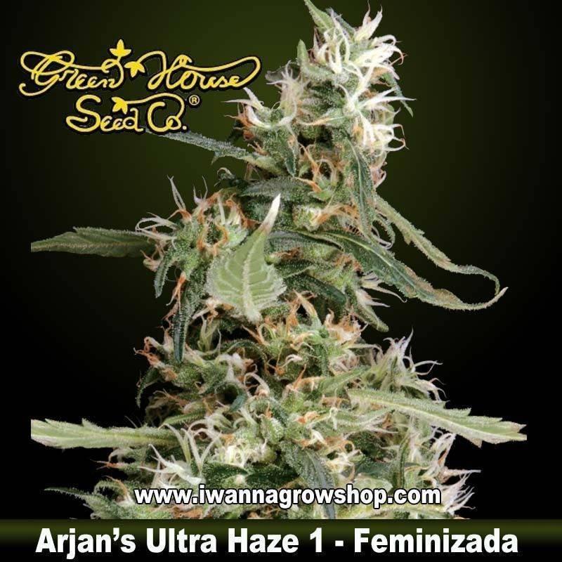 Arjan's Ultra Haze 1 feminizada - Green House - 5 y 10 u.