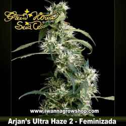 ARJAN´S ULTRA HAZE 2 de GREEN HOUSE | Feminizada | Sativa