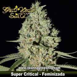 Super Critical – Feminizada – Green House