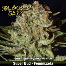 Super Bud feminizada - Green House - 5 y 10 u.