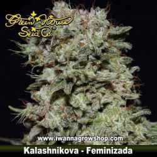 KALASHNIKOVA de GREEN HOUSE | Feminizada | Indica
