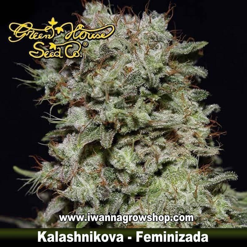 Kalashnikova feminizada - Green House - 5 y 10 u.