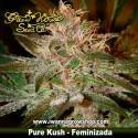 Pure Kush – Feminizada – Green House
