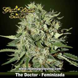 THE DOCTOR de GREEN HOUSE semilla feminizada (INDICA)