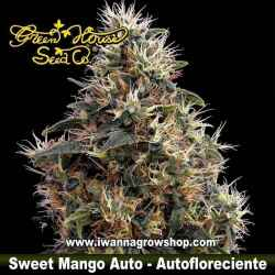 Sweet Mango Auto – Autofloreciente – Green House