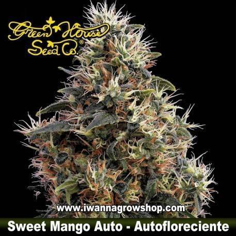 Sweet Mango Auto
