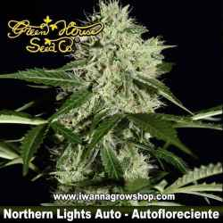 Northern Lights Auto – Autofloreciente – Green House