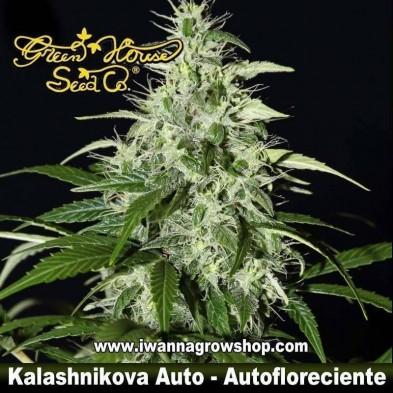 Kalashnikova Auto – Autofloreciente – Green House