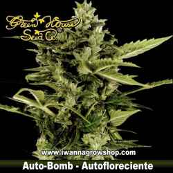 Auto-Bomb – Autofloreciente – Green House