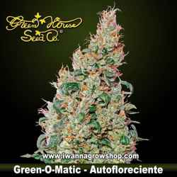 Green-O-Matic – Autofloreciente – Green House