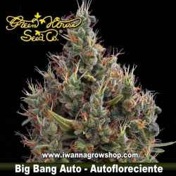 BIG BANG AUTO de GREEN HOUSE | Autofloreciente