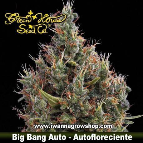 Big Bang autofloreciente - Green House - 3, 5 y 10 u.