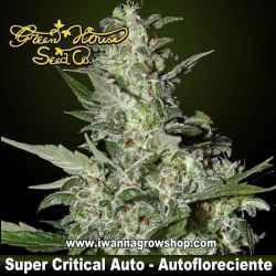Super Critical Auto – Autofloreciente – Green House