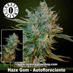 Haze Gom – Autofloreciente – Grass O Matic