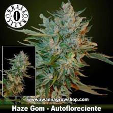 Haze Gom