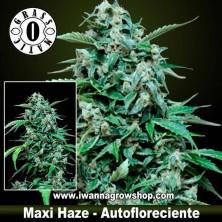 Maxi Haze