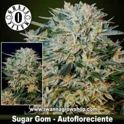 Sugar Gom – Autofloreciente – Grass O Matic
