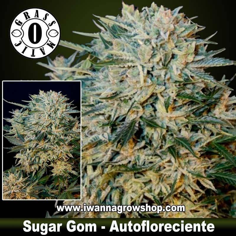 Sugar Gom