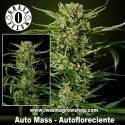 Auto Mass – Autofloreciente – Grass O Matic
