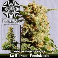 LA BLANCA de KANNABIA | Feminizada | Indica